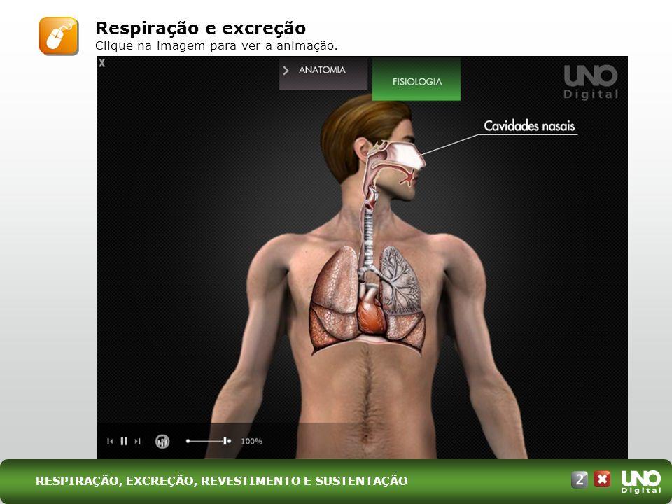 Respiração e excreção Clique na imagem para ver a animação.