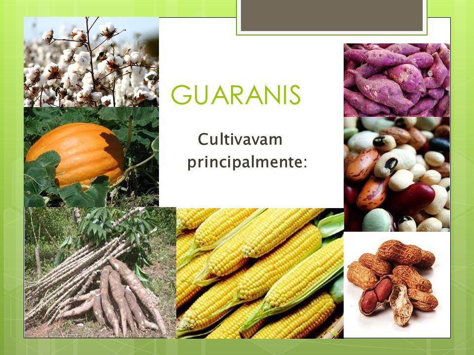 GUARANIS Cultivavam principalmente: