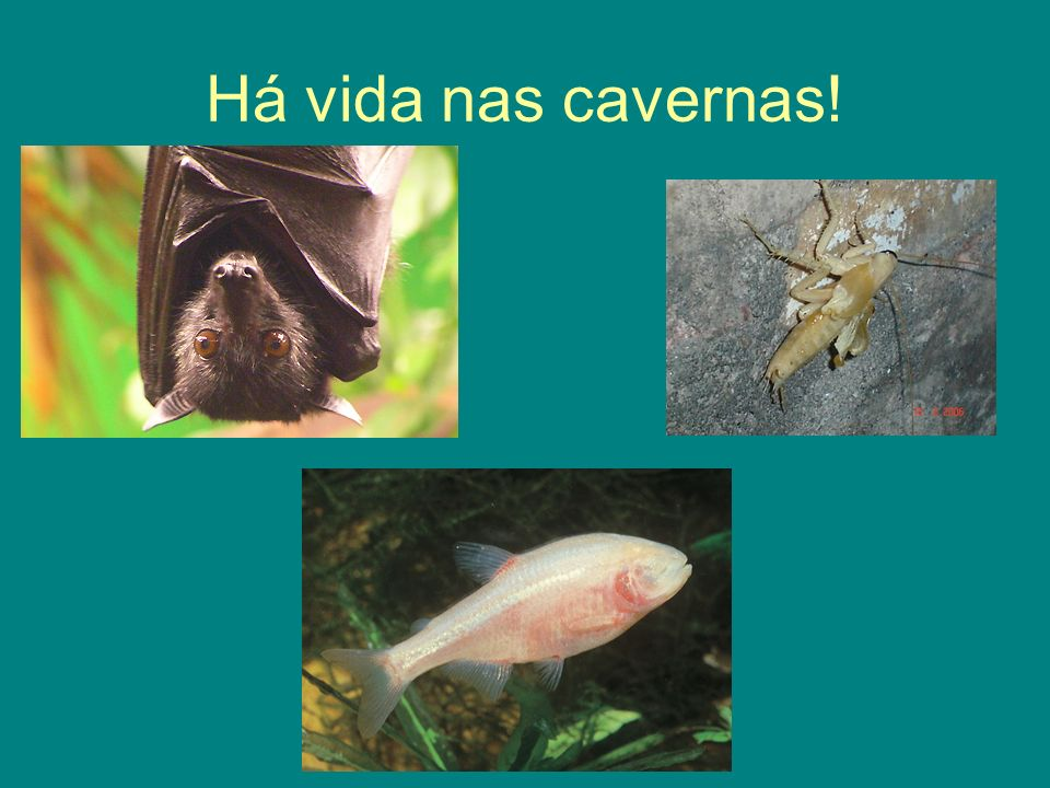 Há vida nas cavernas!