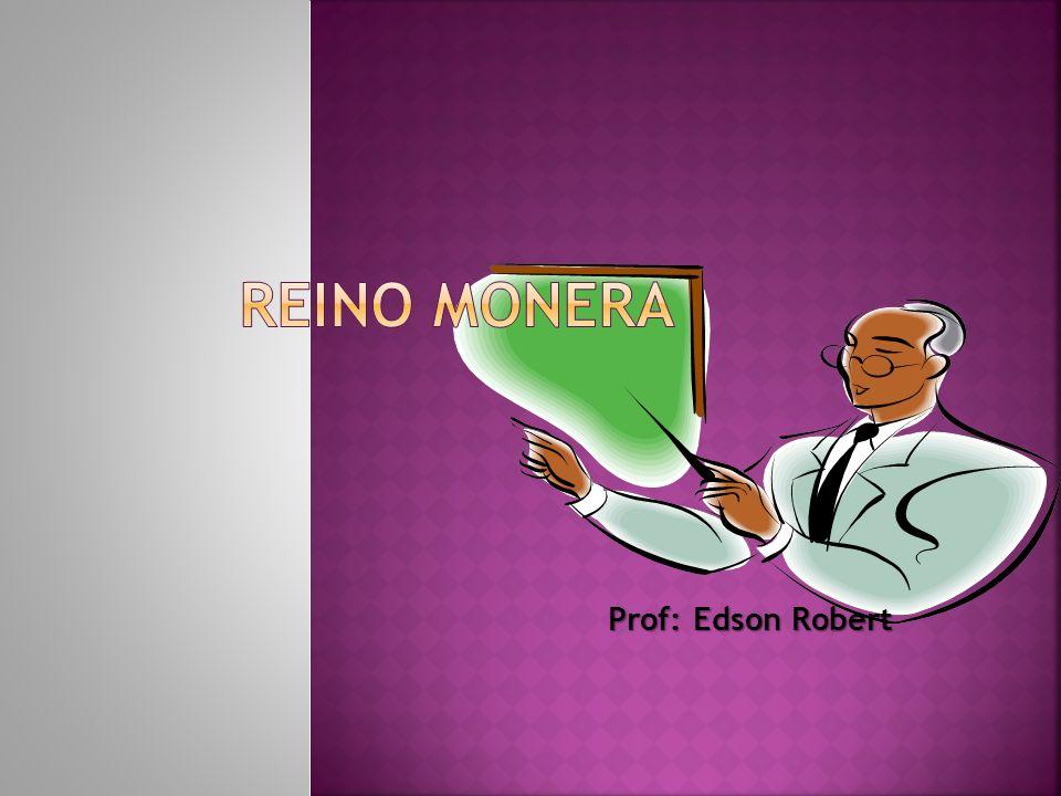 Reino monera Prof: Edson Robert