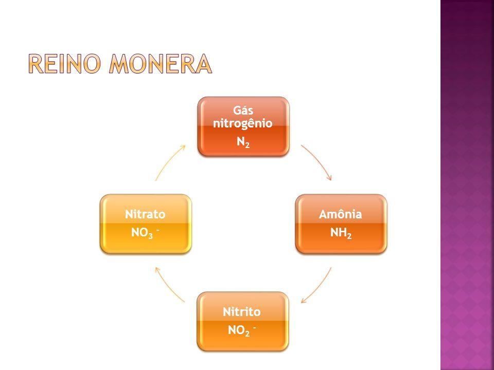 Reino monera Gás nitrogênio N2 Amônia NH2 Nitrito NO2 - Nitrato NO3 -