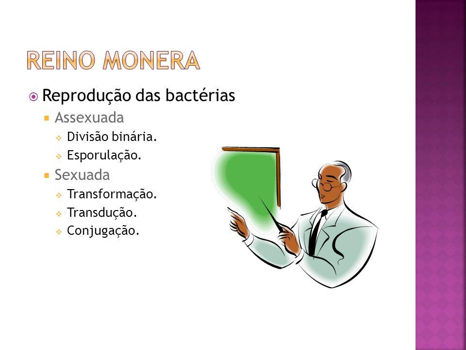 Reino Monera Reprodução das bactérias Assexuada Sexuada