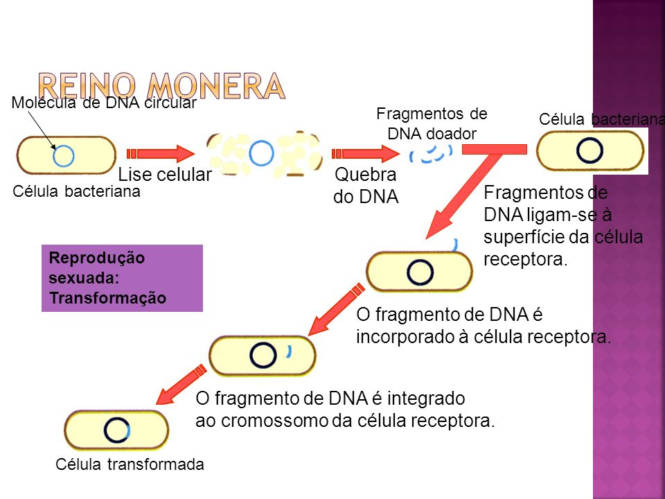 Fragmentos de DNA doador