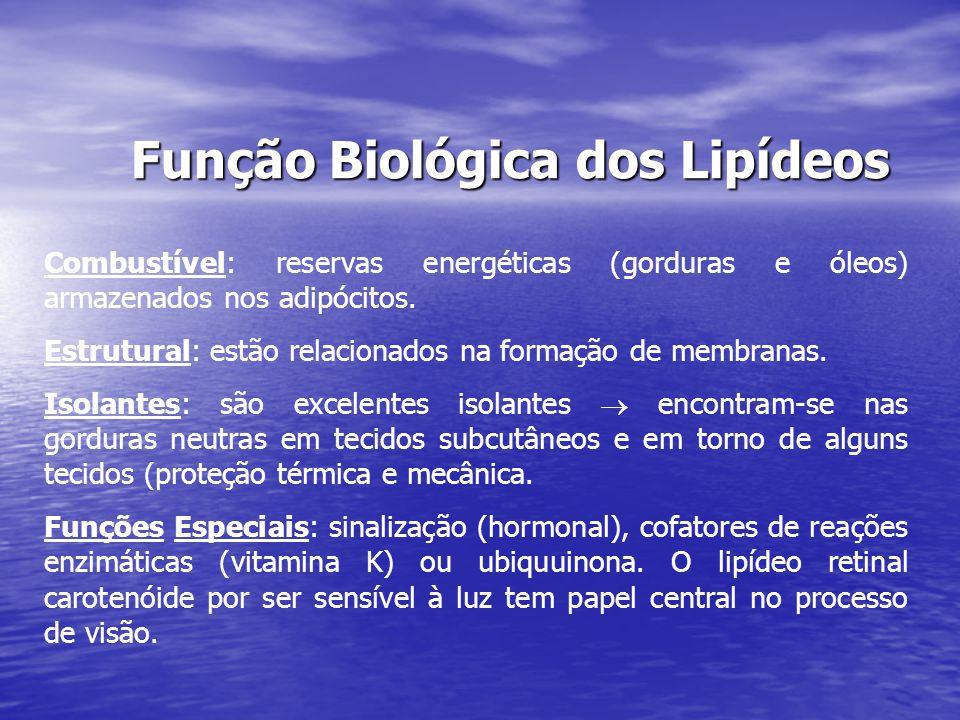 Função Biológica dos Lipídeos