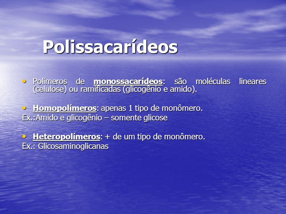 Polissacarídeos Polímeros de monossacarídeos: são moléculas lineares (celulose) ou ramificadas (glicogênio e amido).