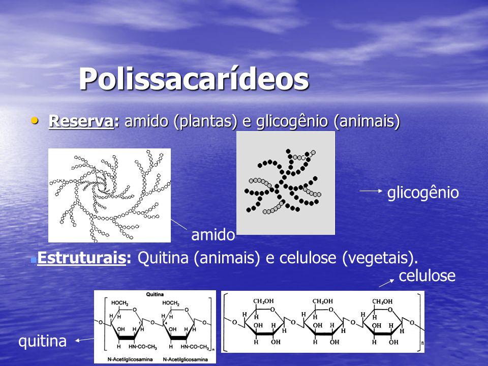 Polissacarídeos Reserva: amido (plantas) e glicogênio (animais)