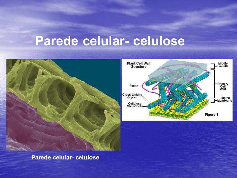 Parede celular- celulose