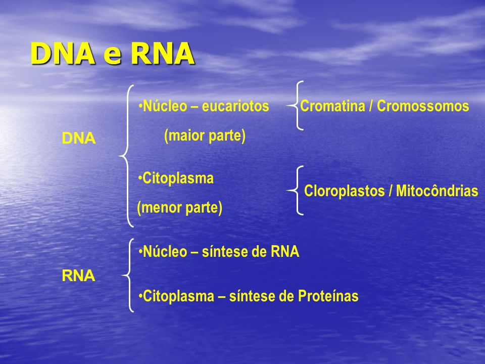 DNA e RNA Núcleo – eucariotos (maior parte) Cromatina / Cromossomos