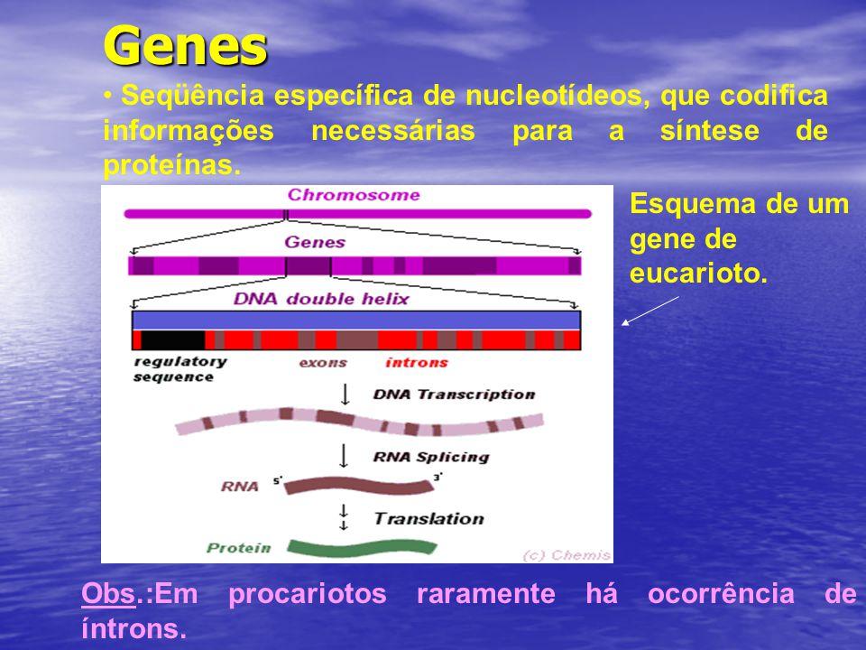 Genes Seqüência específica de nucleotídeos, que codifica informações necessárias para a síntese de proteínas.