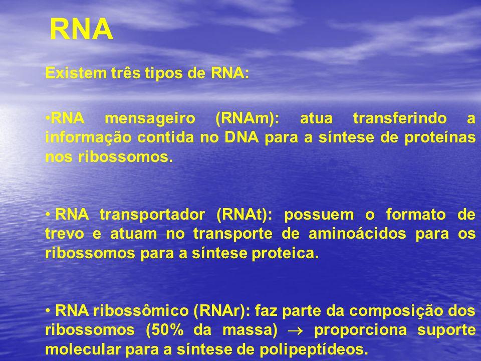 RNA Existem três tipos de RNA: