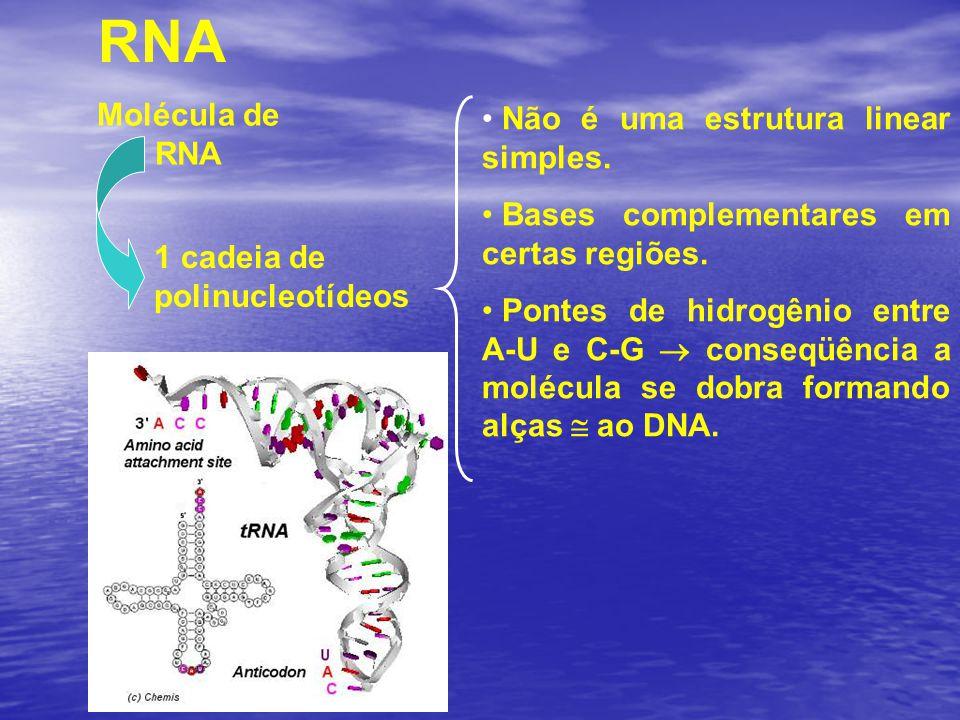 RNA Molécula de RNA Não é uma estrutura linear simples.
