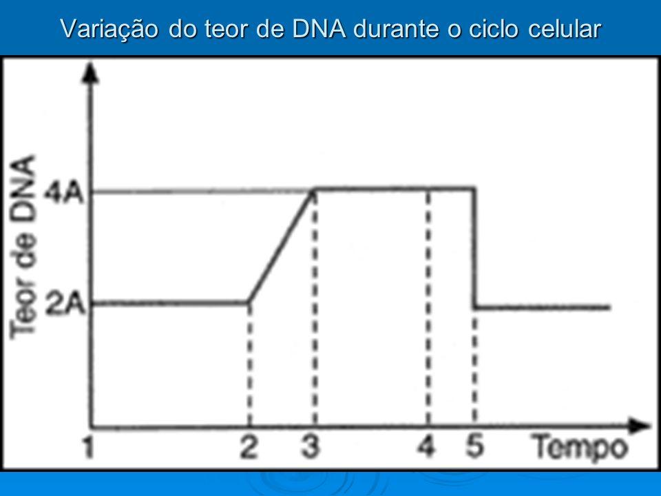Variação do teor de DNA durante o ciclo celular