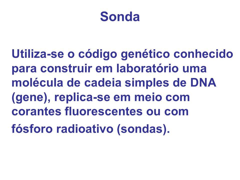 Sonda fósforo radioativo (sondas).