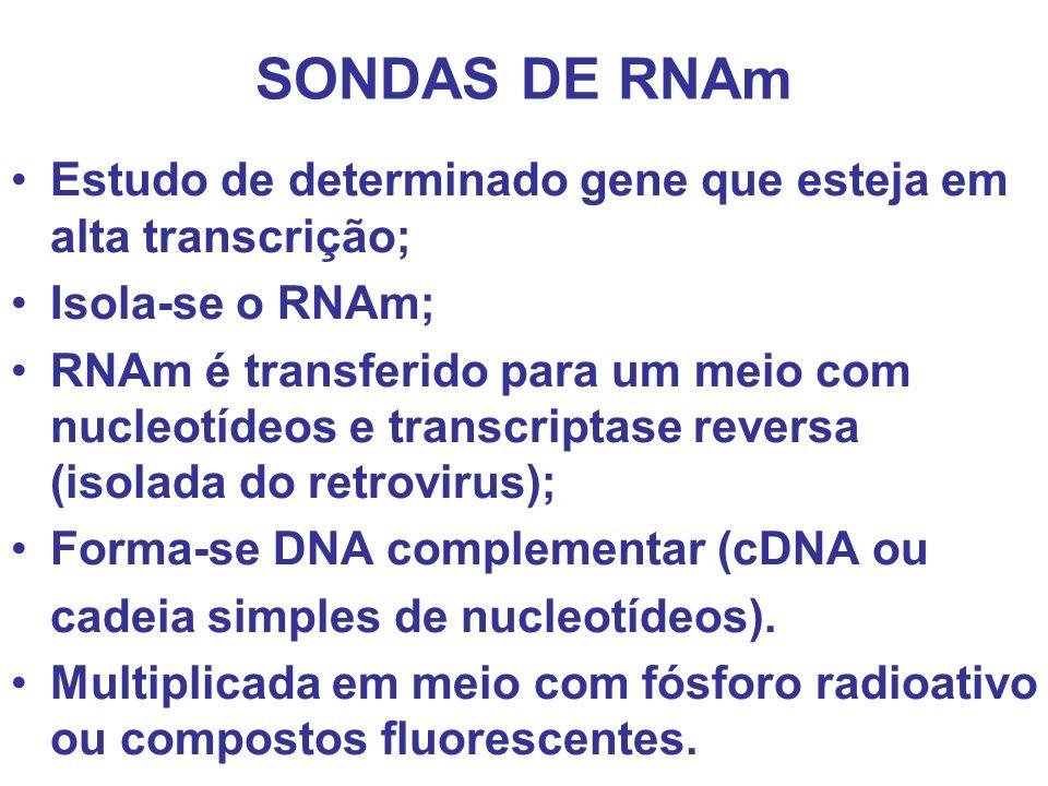 SONDAS DE RNAm Estudo de determinado gene que esteja em alta transcrição; Isola-se o RNAm;