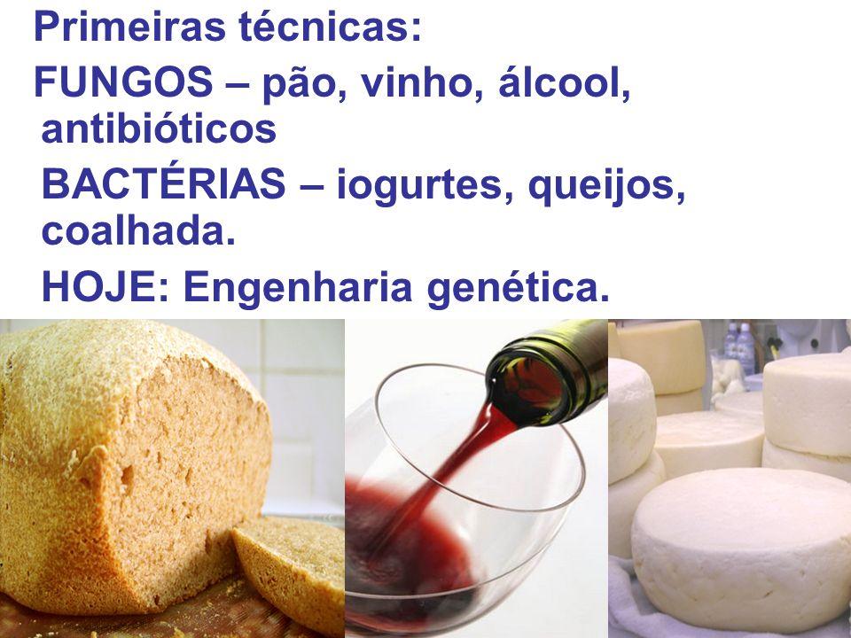 Primeiras técnicas: FUNGOS – pão, vinho, álcool, antibióticos. BACTÉRIAS – iogurtes, queijos, coalhada.