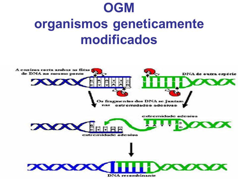 OGM organismos geneticamente modificados