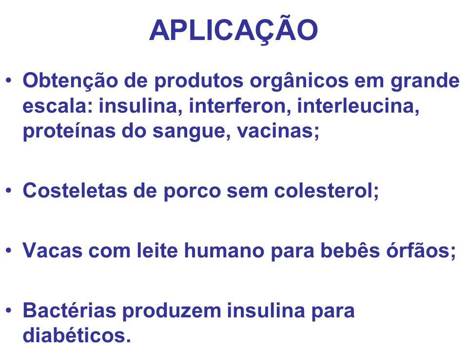 APLICAÇÃO Obtenção de produtos orgânicos em grande escala: insulina, interferon, interleucina, proteínas do sangue, vacinas;