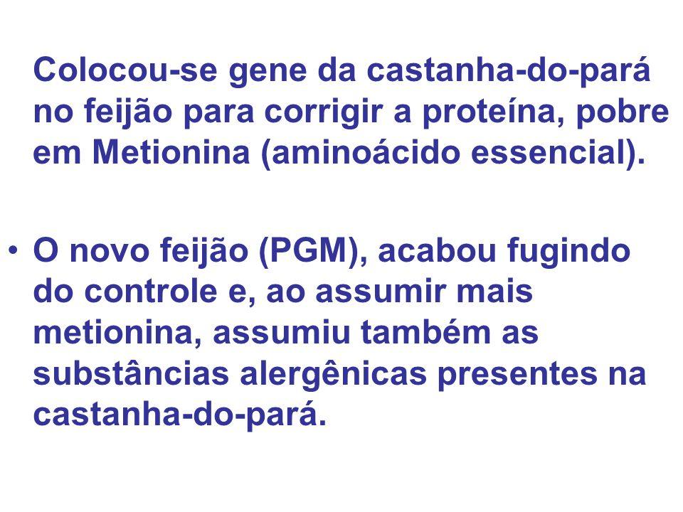 Colocou-se gene da castanha-do-pará no feijão para corrigir a proteína, pobre em Metionina (aminoácido essencial).
