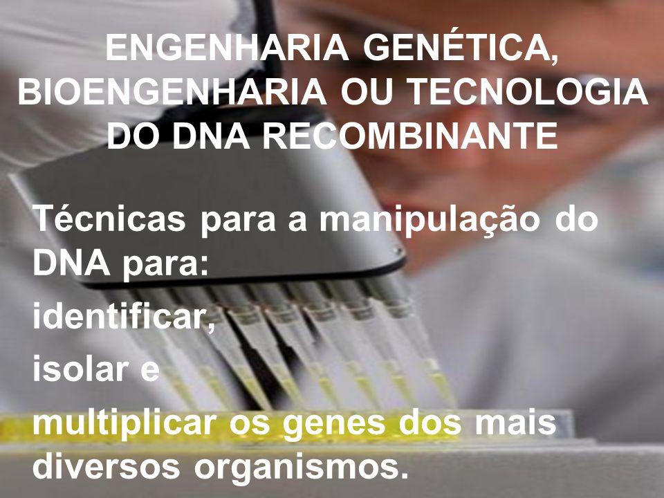 ENGENHARIA GENÉTICA, BIOENGENHARIA OU TECNOLOGIA DO DNA RECOMBINANTE