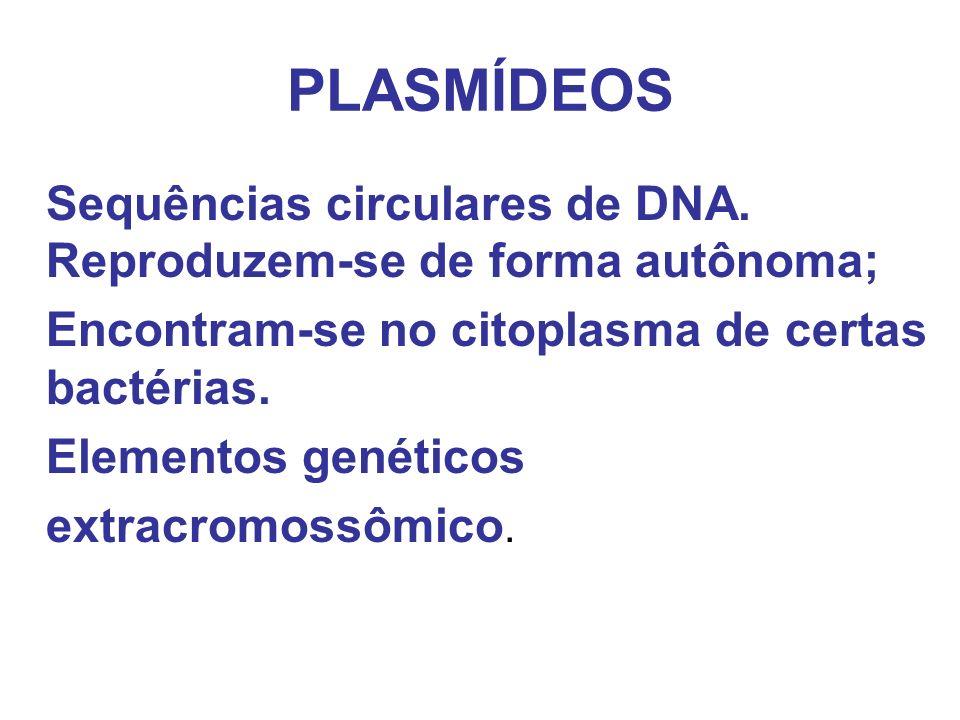 PLASMÍDEOS Encontram-se no citoplasma de certas bactérias.