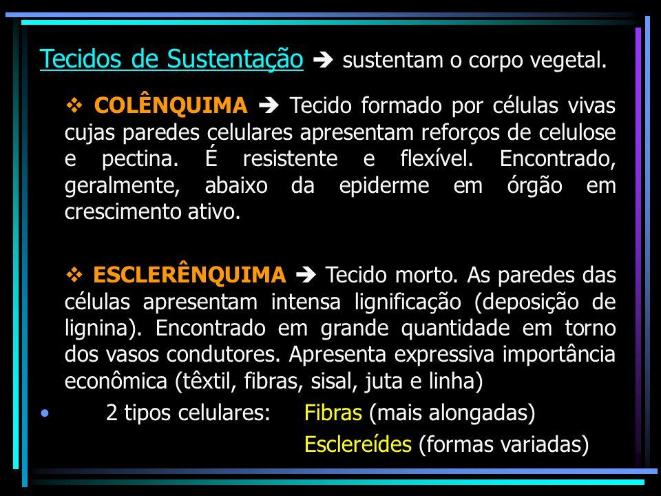 Tecidos de Sustentação  sustentam o corpo vegetal.