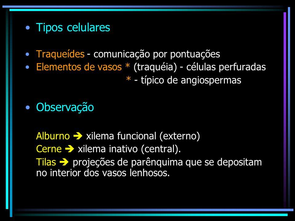 Tipos celulares Observação Traqueídes - comunicação por pontuações