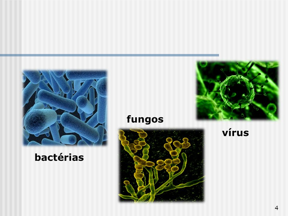 fungos vírus bactérias