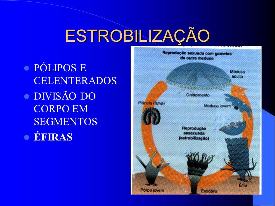 ESTROBILIZAÇÃO PÓLIPOS E CELENTERADOS DIVISÃO DO CORPO EM SEGMENTOS