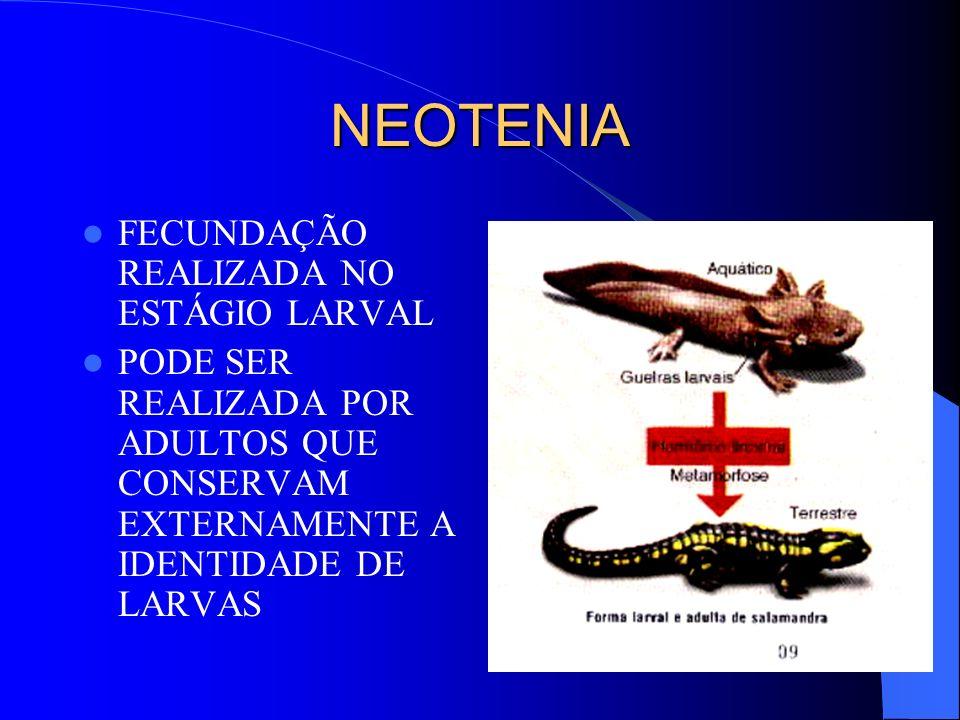 NEOTENIA FECUNDAÇÃO REALIZADA NO ESTÁGIO LARVAL