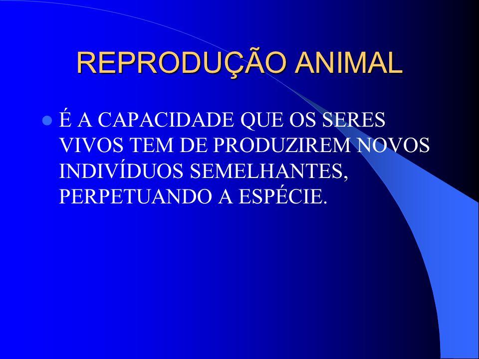 REPRODUÇÃO ANIMAL É A CAPACIDADE QUE OS SERES VIVOS TEM DE PRODUZIREM NOVOS INDIVÍDUOS SEMELHANTES, PERPETUANDO A ESPÉCIE.