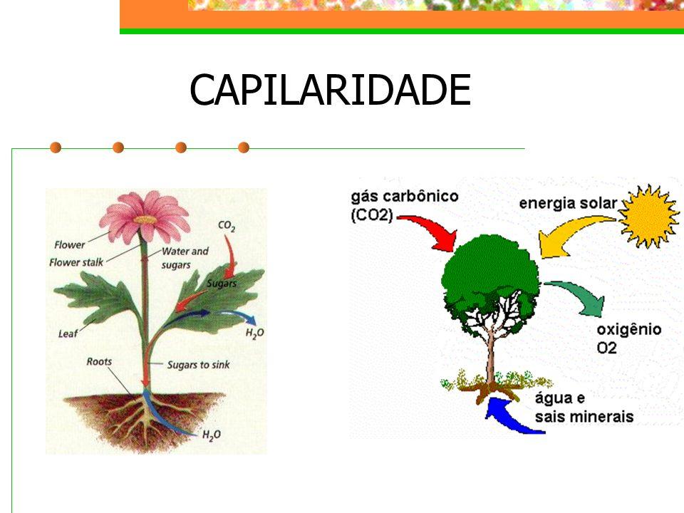 CAPILARIDADE