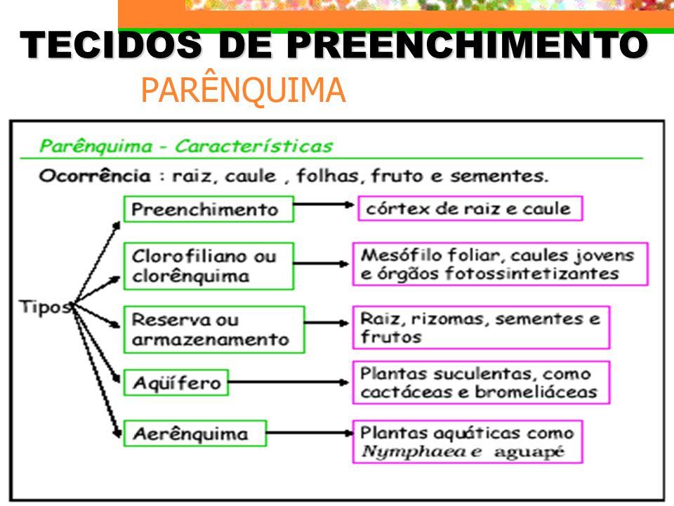 TECIDOS DE PREENCHIMENTO
