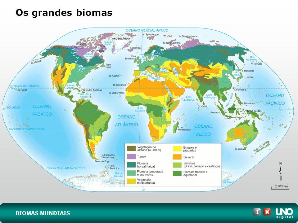 Os grandes biomas Geo-cad1-top-6 – 3 Prova