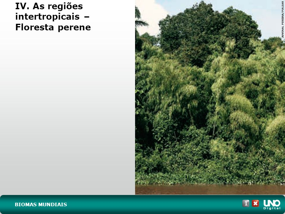 IV. As regiões intertropicais – Floresta perene