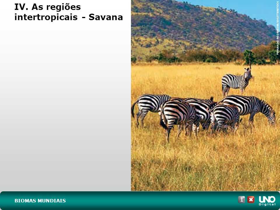 IV. As regiões intertropicais - Savana