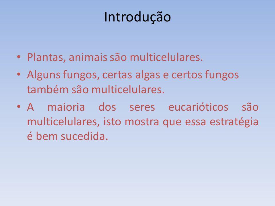 Introdução Plantas, animais são multicelulares.