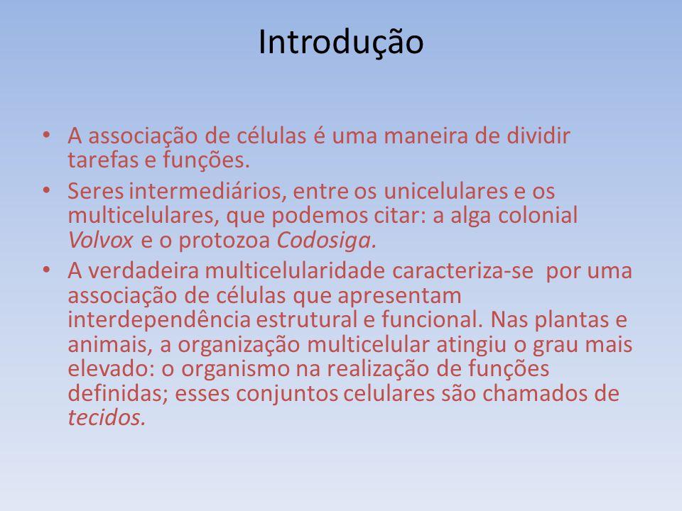 Introdução A associação de células é uma maneira de dividir tarefas e funções.