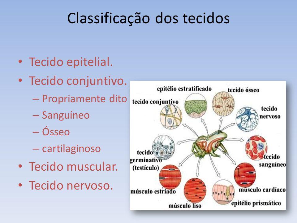 Classificação dos tecidos