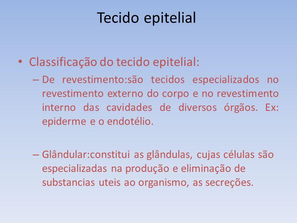 Tecido epitelial Classificação do tecido epitelial: