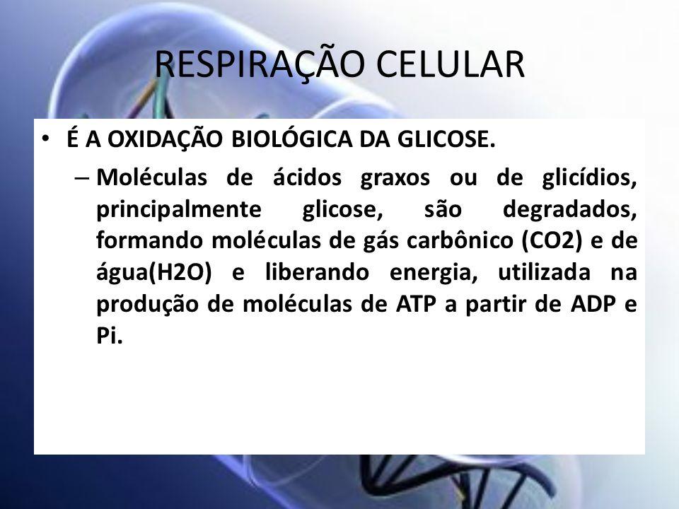 RESPIRAÇÃO CELULAR É A OXIDAÇÃO BIOLÓGICA DA GLICOSE.