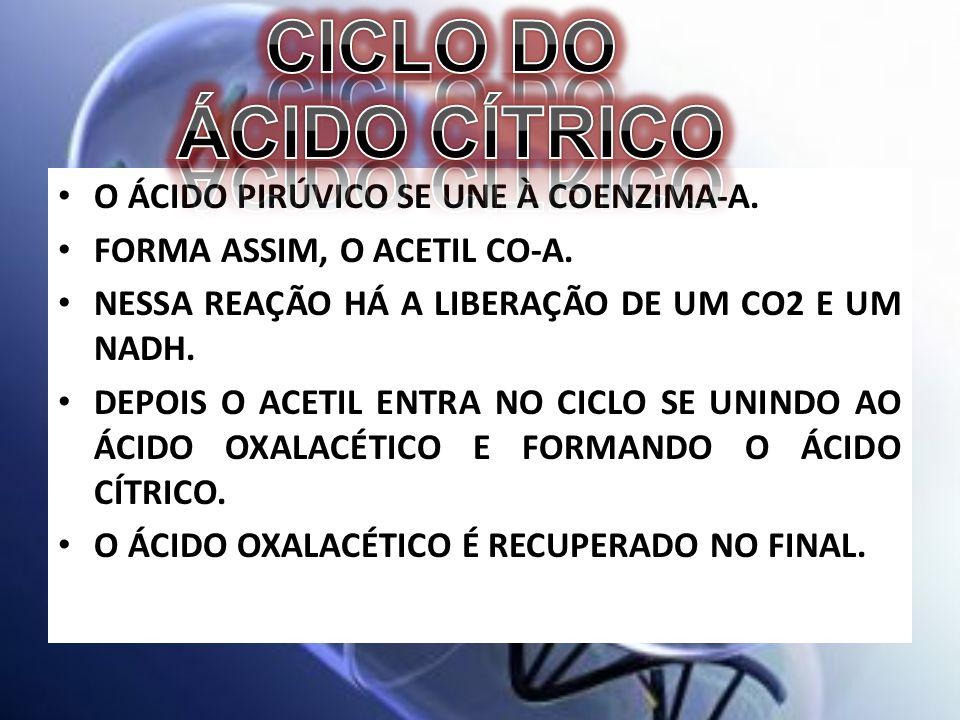 CICLO DO ÁCIDO CÍTRICO O ÁCIDO PIRÚVICO SE UNE À COENZIMA-A.