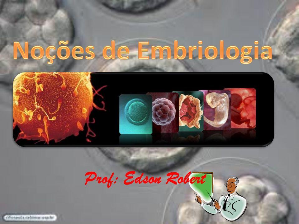 Noções de Embriologia Prof: Edson Robert