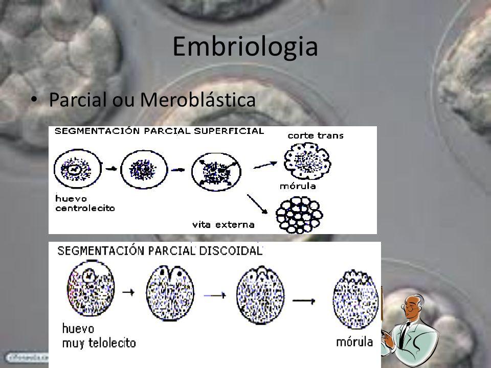 Embriologia Parcial ou Meroblástica