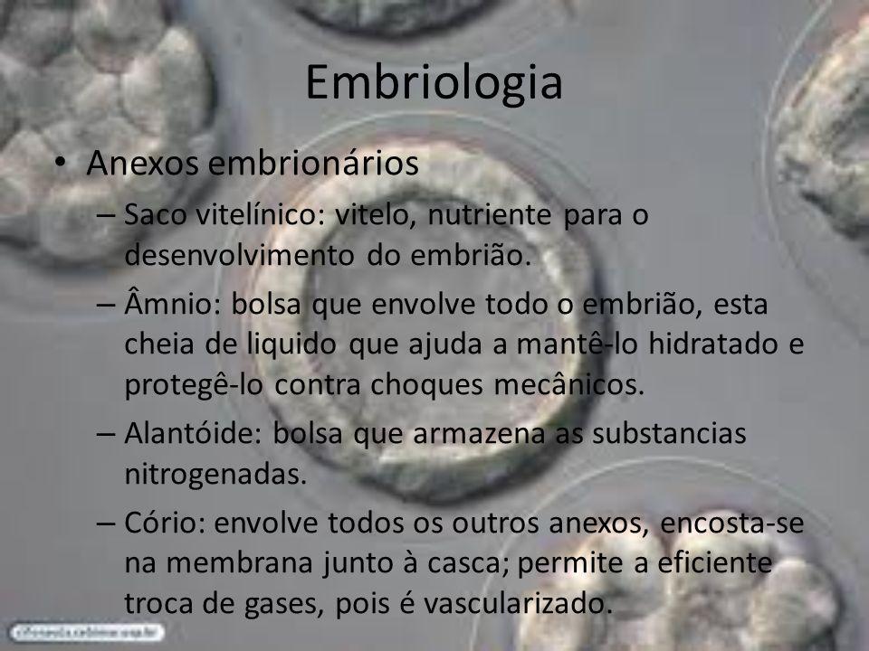 Embriologia Anexos embrionários