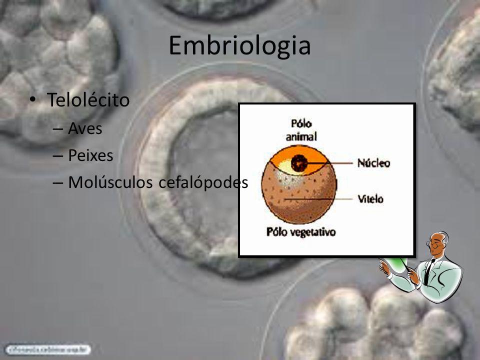 Embriologia Telolécito Aves Peixes Molúsculos cefalópodes
