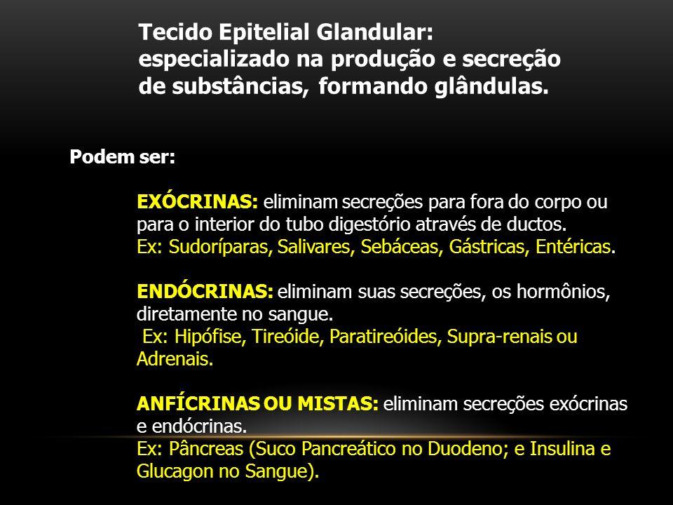 Tecido Epitelial Glandular: especializado na produção e secreção de substâncias, formando glândulas.