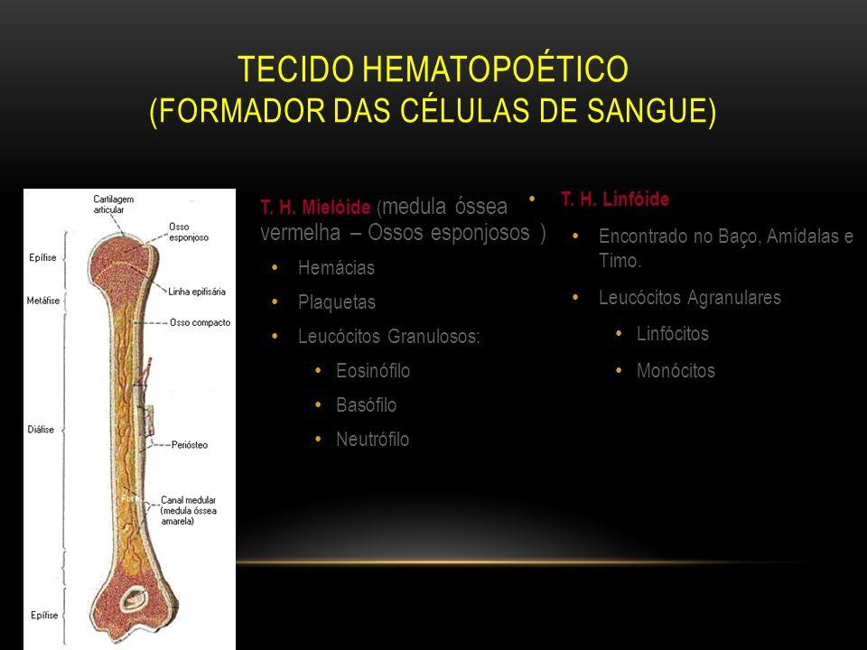 Tecido Hematopoético (formador das células de sangue)