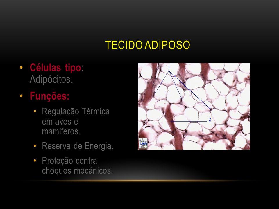 Tecido Adiposo Células tipo: Adipócitos. Funções: