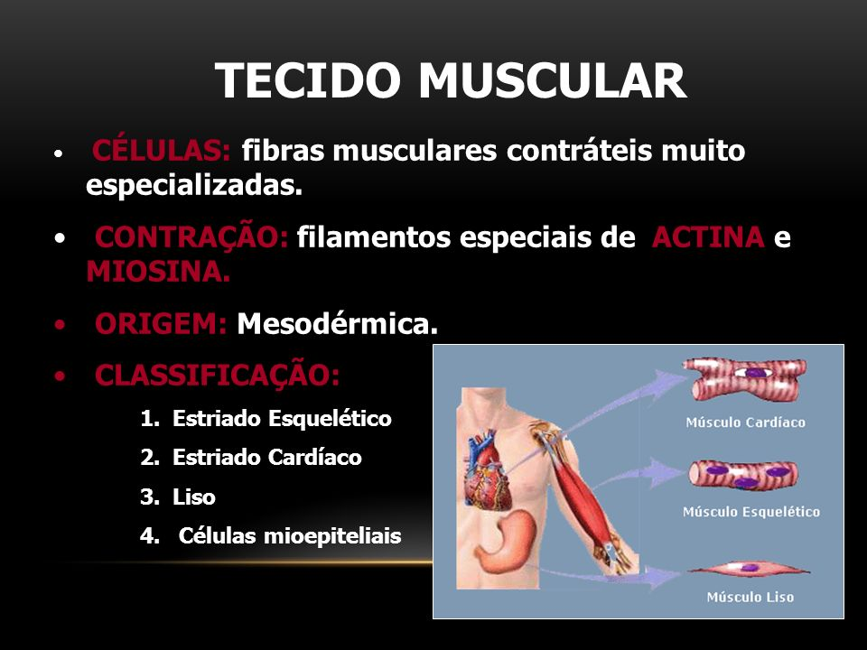 TECIDO MUSCULAR CONTRAÇÃO: filamentos especiais de ACTINA e MIOSINA.