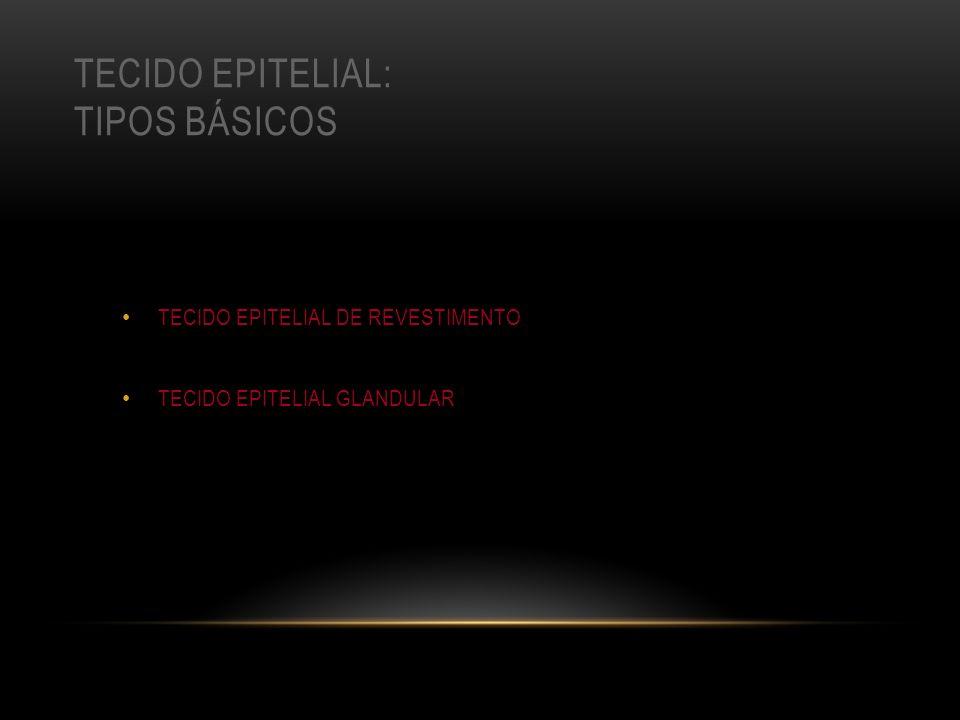 TECIDO EPITELIAL: TIPOS BÁSICOS